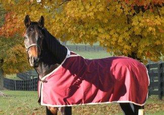 Textiles pour chevaux personnalisé
