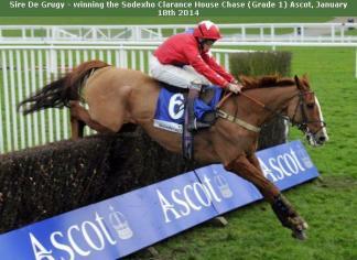Guêtres de protection pour chevaux