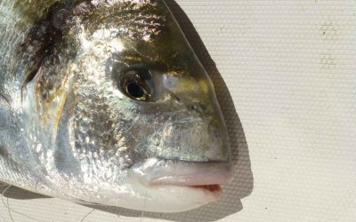 Adelanto de la temporada de #pesca