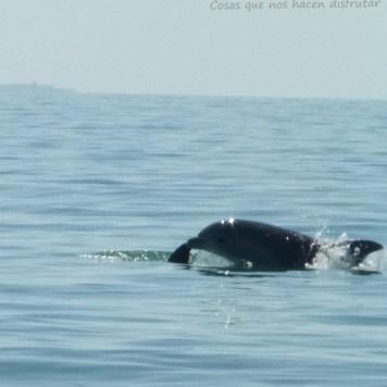 Pesca de caballas con delfines en Doñana _ Guadalquivir (3)