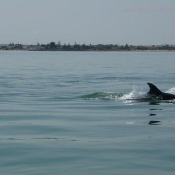 Pesca de caballas con delfines en Doñana _ Guadalquivir (8)