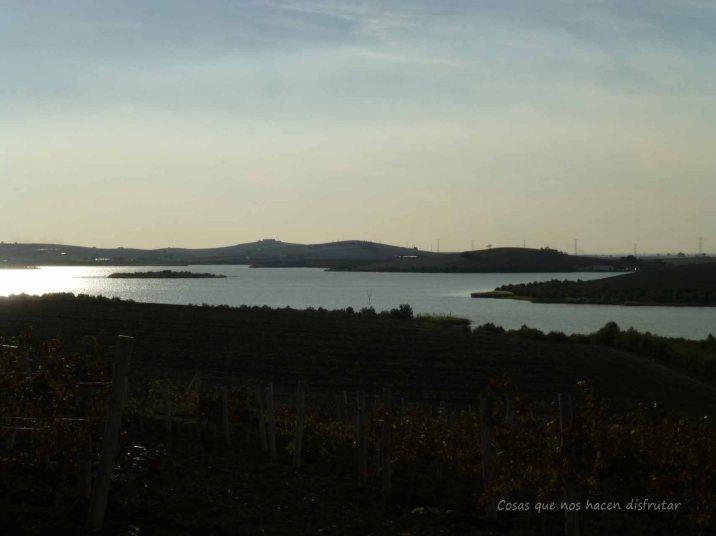 #PeterMaurer #vino #ecologico (13)