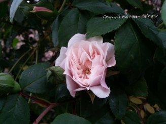 #primavera #disfrutar #belleza #campo #sonidos #olor #naturaleza #vida (2)