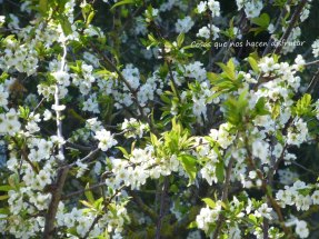 #primavera #disfrutar #belleza #campo #sonidos #olor #naturaleza #vida (9)