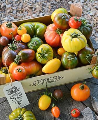 Temporada de Tomates con Sabor y SORTEO Temporada de Tomates con Sabor y SORTEO TOMATEROTOMATERO