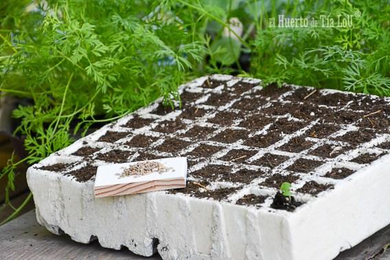 Cómo regar los semilleros. El mejor método
