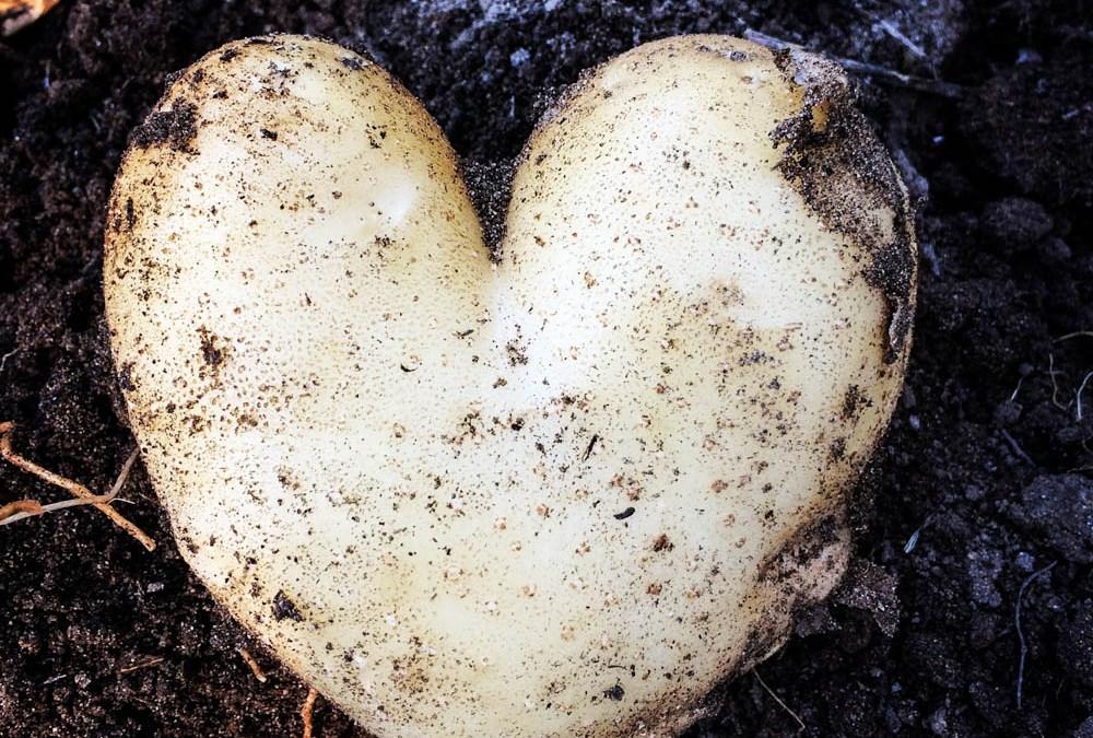 Patatas de Sanlúcar: Origen y calidad.