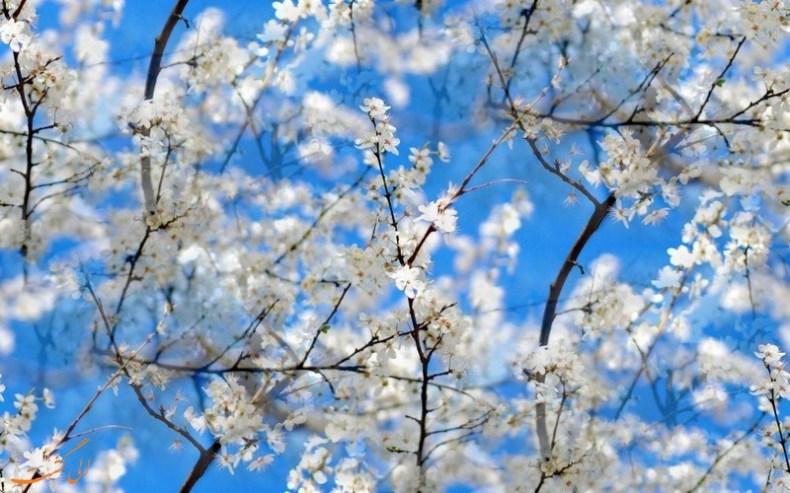تصاویری زیبا و دل انگیز از طبیعت بهاری   جلوه های زیبای طبیعت در بهار