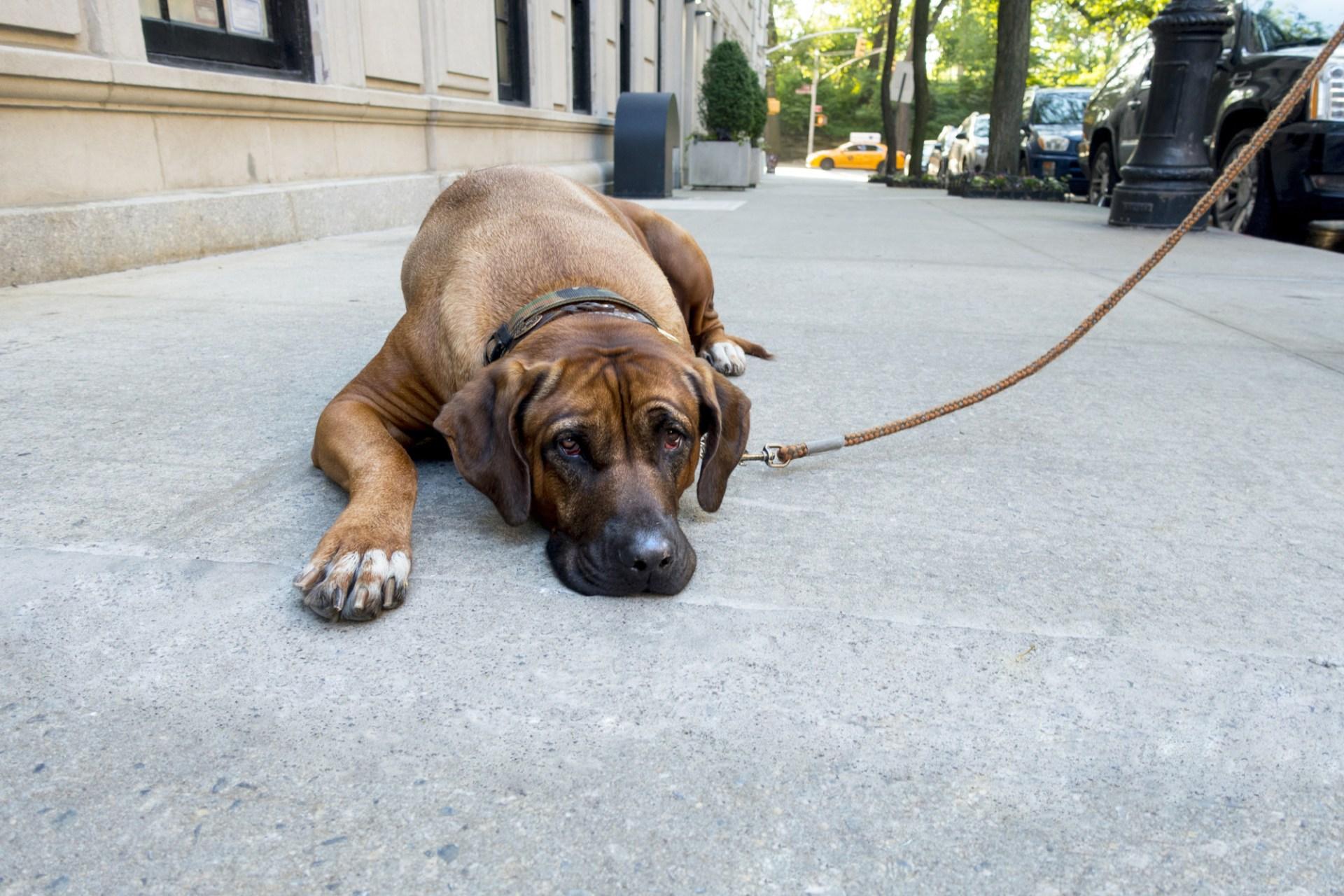 Renting Pet-Friendly New York City Apartments