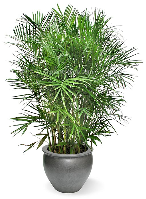 Best Indoor Plants for Air Quilty in Your Apartment
