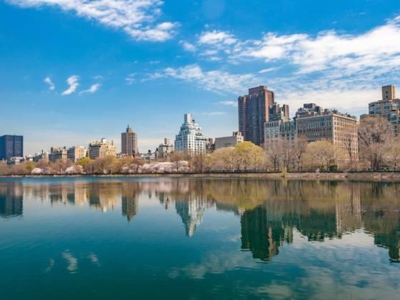 Central Park Real Estate