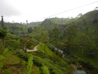 Sri Lanka Piantagioni di the a Nuwara Eliya