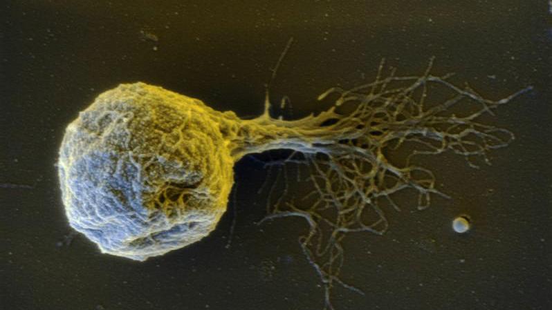Methancaldococcus villosus, bacteria compatible con algunas condiciones de Encélado
