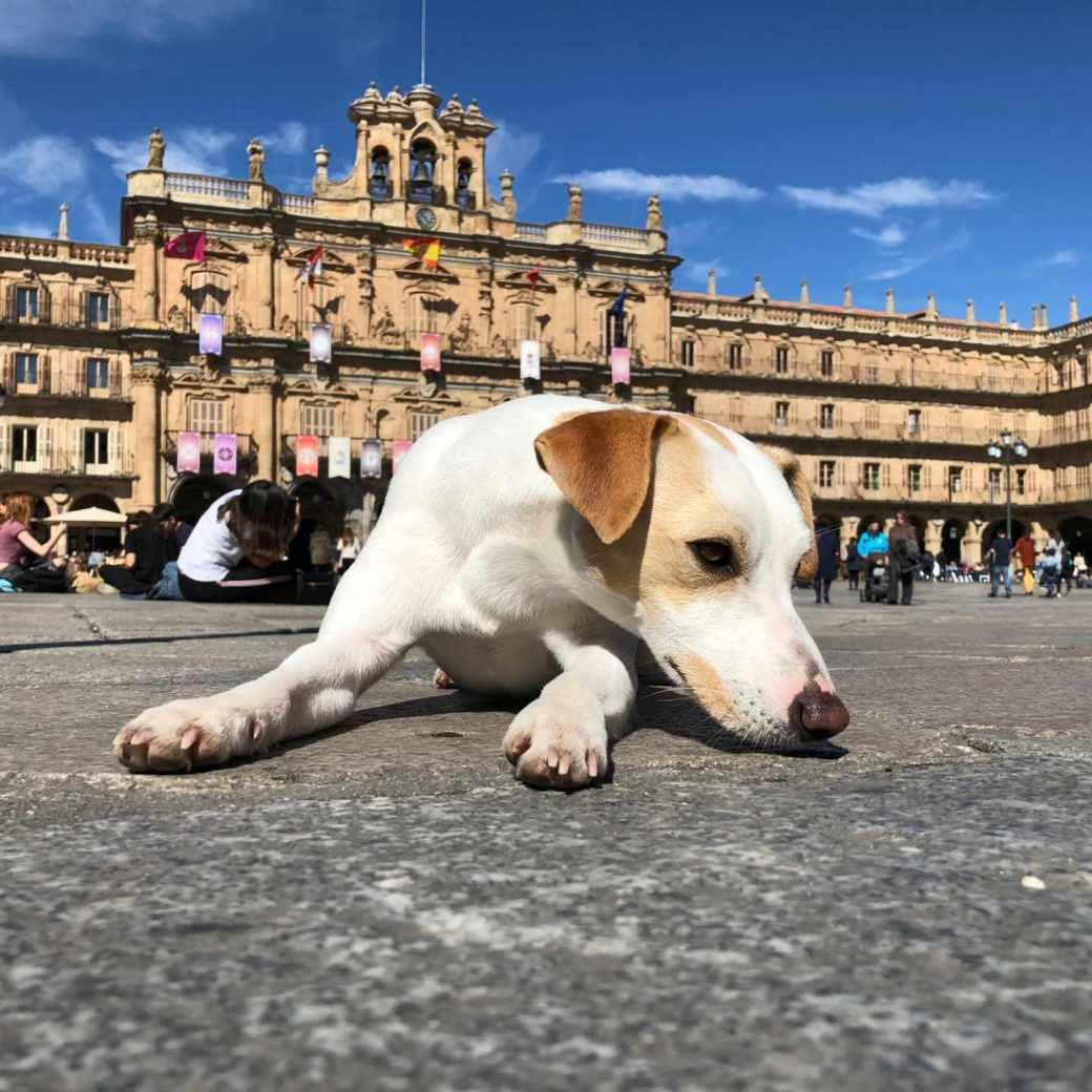 Pipper, el perro turista