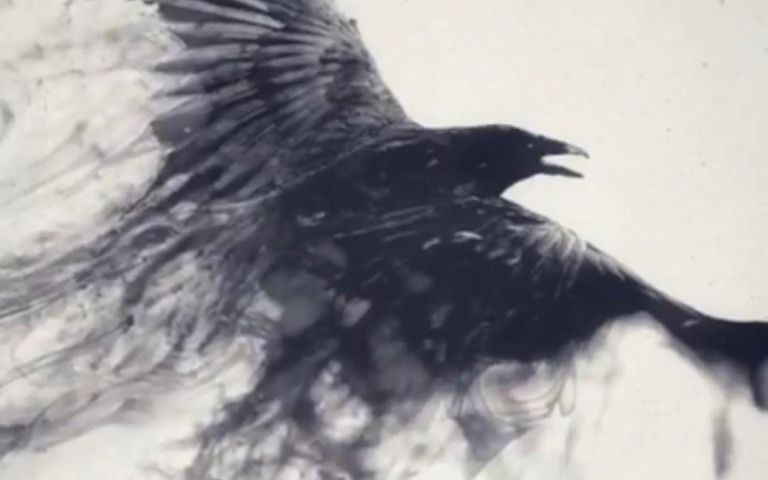 "Asbolus  ""The Black Winged One"""