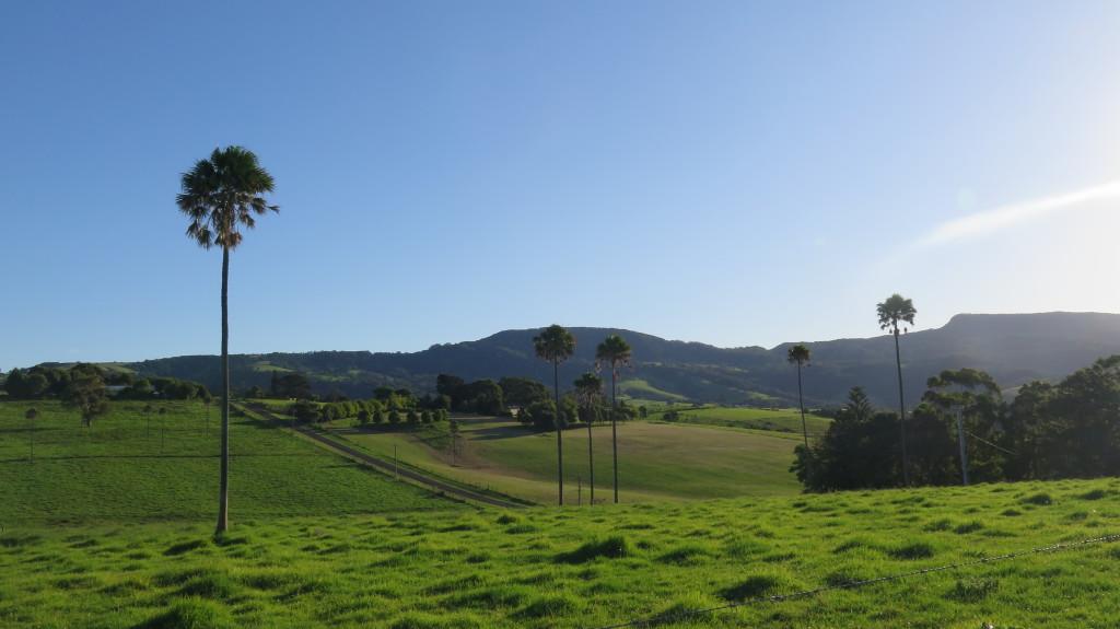 Campagne australienne, région de Jamberoo
