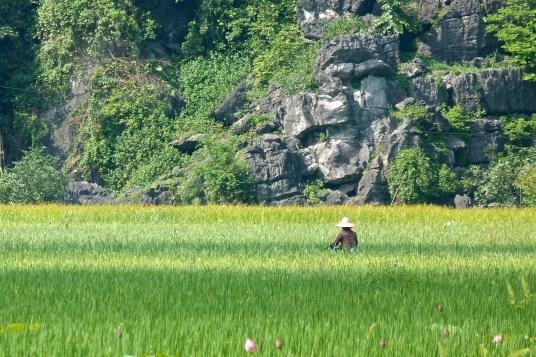 Velo rizières Bilan Vietnam blog voyage 2016 18