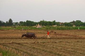 Buffle Hue Vietnam blog voyage 2016 19