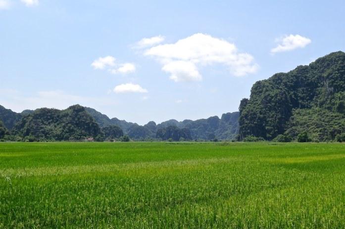 Rizières Tam Coc Baie Halong terrestre Vietnam blog voyage 2016 13