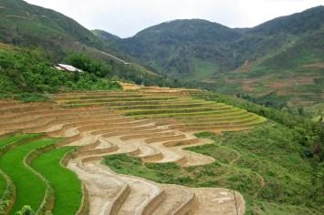 Rizières Trek Sapa Vietnam blog voyage 2016 11
