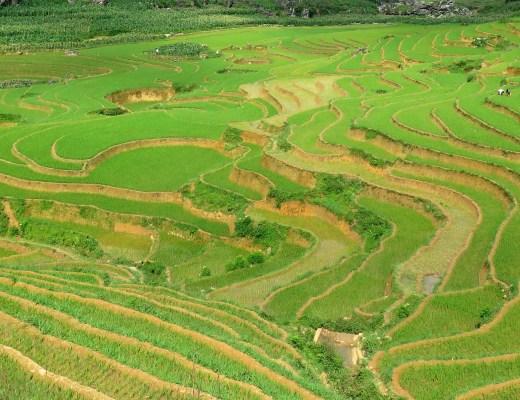 Rizières en terrasses Ta Phin Trek Sapa Vietnam blog voyage 2016 19