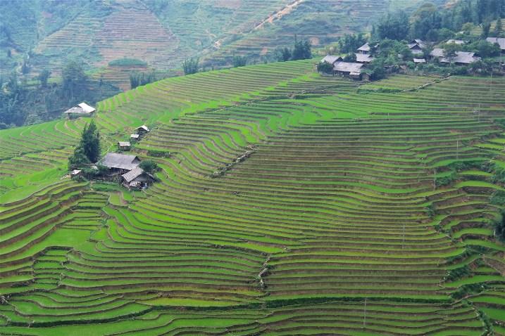 Rizières Trek Sapa Vietnam blog voyage 2016 26