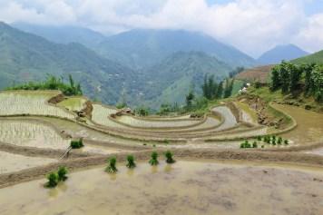 Rizières Trek Sapa Vietnam blog voyage 2016 30
