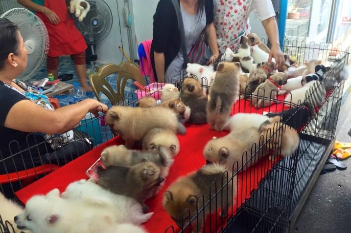 Marché Chatuchak Bangkok Thailande blog voyage 2016 31