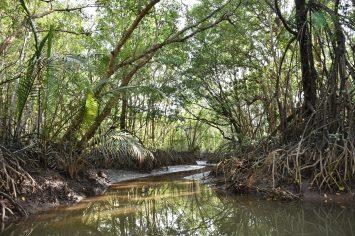 Mangrove Cherating Malaisie blog voyage 2016 18