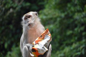 Singes Batu Cave Kuala Lumpur Malaisie blog voyage 2016 25
