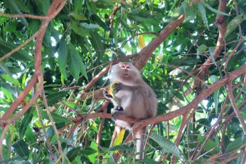 Singe ABC Beach Palau Tioman Malaisie blog voyage 2016 10