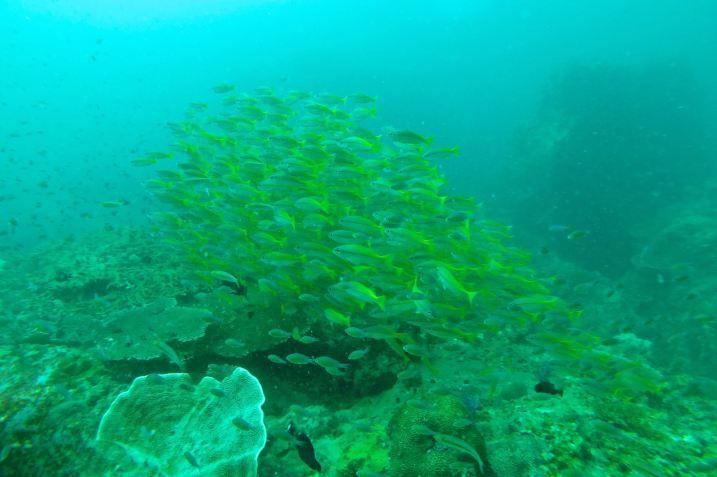 Plongée Palau Tioman Malaisie blog voyage 2016 2