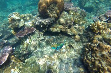 Genting Bay Palau Tioman Malaisie blog voyage 2016 28