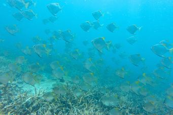 Renggis Island Palau Tioman Malaisie blog voyage 2016 30