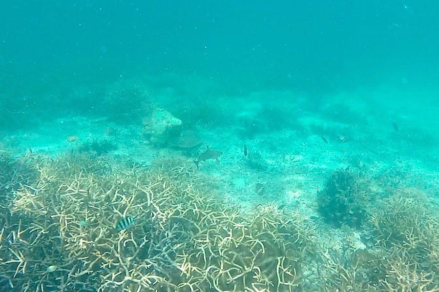 Requin Renggis island Palau Tioman Malaisie blog voyage 2016 32