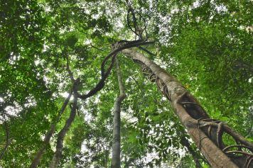 Jungle trek Palau Tioman Malaisie blog voyage 2016 38