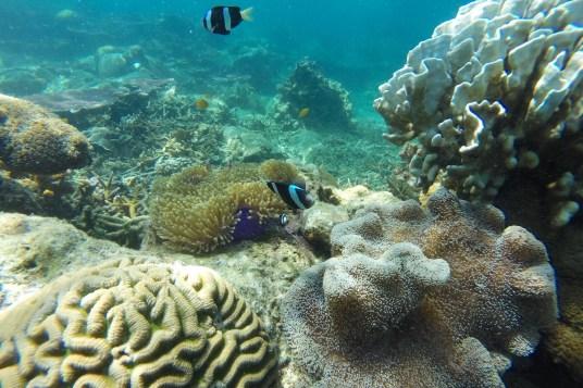 Aquarium Palau Tioman Malaisie blog voyage 2016 5