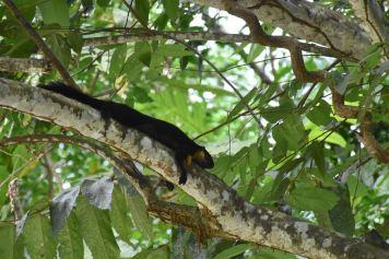 Jungle trek Palau Tioman Malaisie blog voyage 2016 40