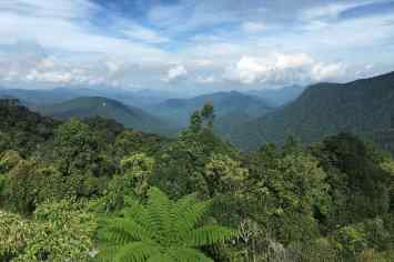 Gunung Brinchang Tanah Rata Cameron Highlands Malaisie blog voyage 2016 14