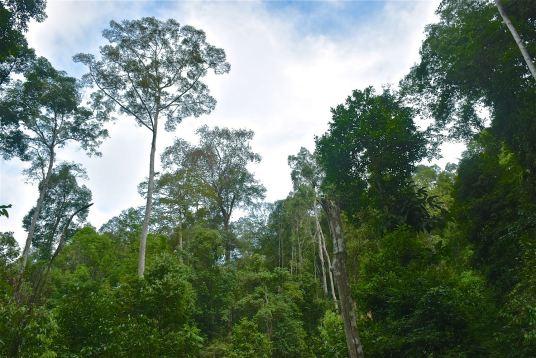 Foret Trek Taman Negara Malaisie blog voyage 2016 30
