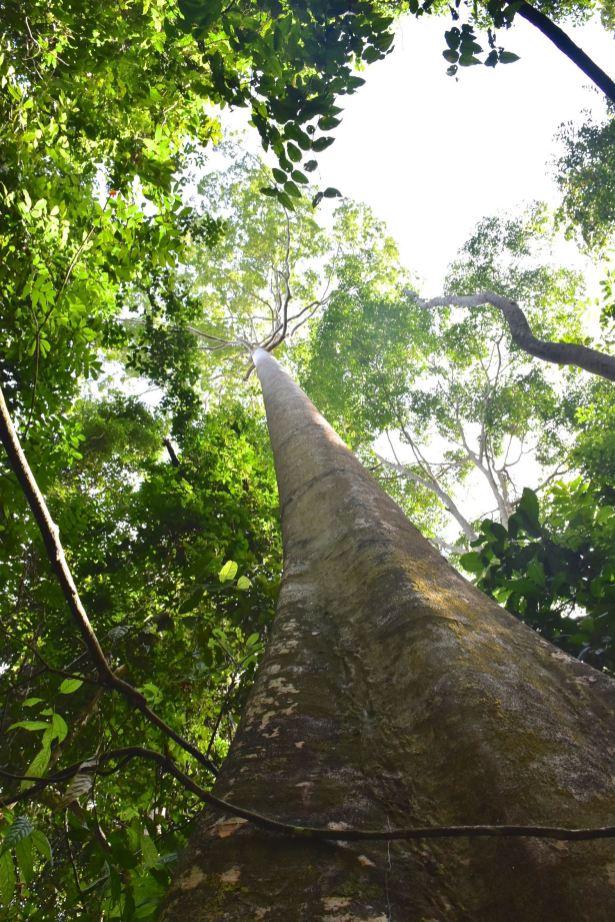 Trek Taman Negara Malaisie blog voyage 2016 4