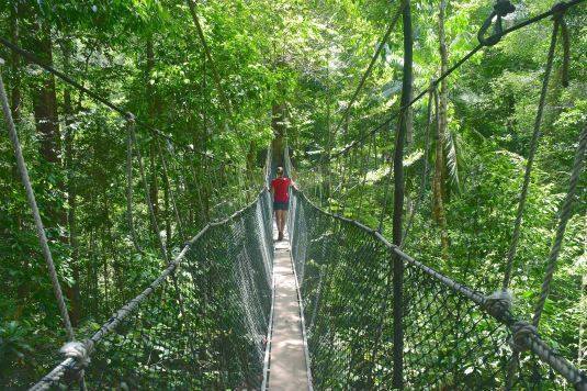 Canopee walkway Trek Taman Negara Malaisie blog voyage 2016 43