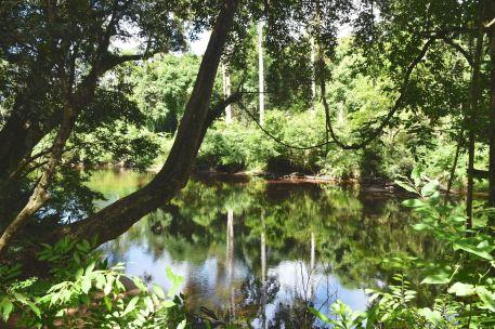 Trek Taman Negara Malaisie blog voyage 2016 6