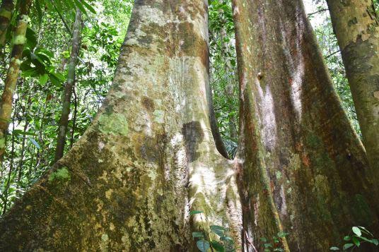 Trek Taman Negara Malaisie blog voyage 2016 9