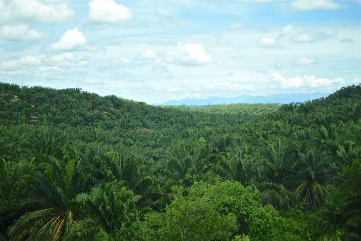 Palmitos Bilan Malaisie blog voyage 2016 10