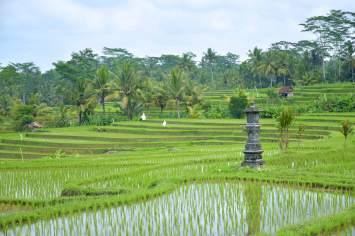 Rizières ubud-indonesie-blog-voyage-2016-16