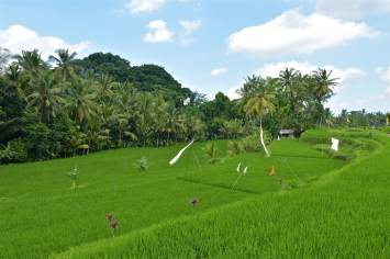 Rizières ubud-indonesie-blog-voyage-2016-29