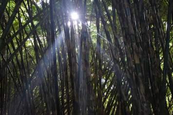 Bamboo forest ubud-indonesie-blog-voyage-2016-37