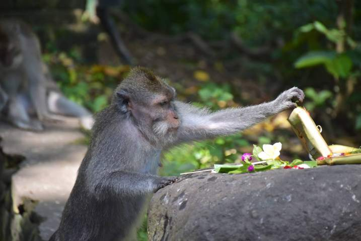 Monkey forest ubud-indonesie-blog-voyage-2016-50