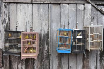 Cages oiseaux yogyakarta-borobudur-prambanan-indonesie-blog-voyage-2016-34
